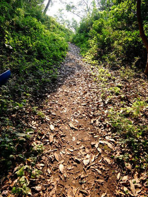 黒崎海岸への道