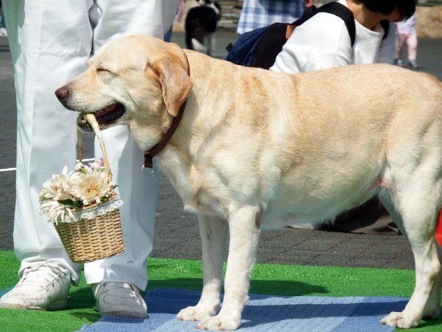 動物フェスティバルよこすか